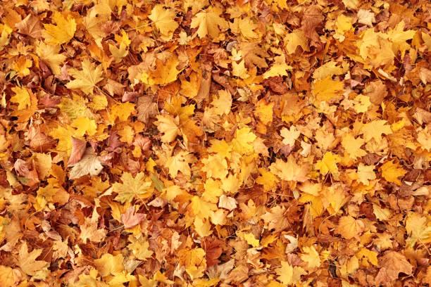 Seamless autumn leaves background picture id995531202?b=1&k=6&m=995531202&s=612x612&w=0&h=ih08cc3h rtllow2teywsacv6htujotbndzcooiuawo=