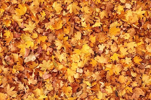 Seamless Autumn Leaves Background - Fotografias de stock e mais imagens de Alemanha