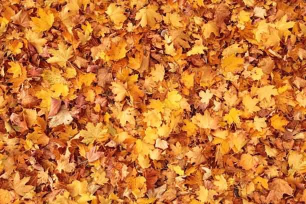 seamless autumn leaves background - leaf imagens e fotografias de stock