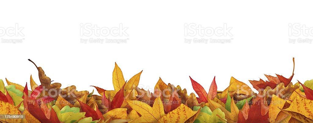 Seamless Autumn Leaves royalty-free stock photo