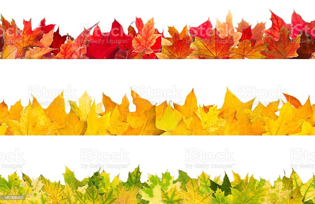 Seamless autumn maple leaves stock photo