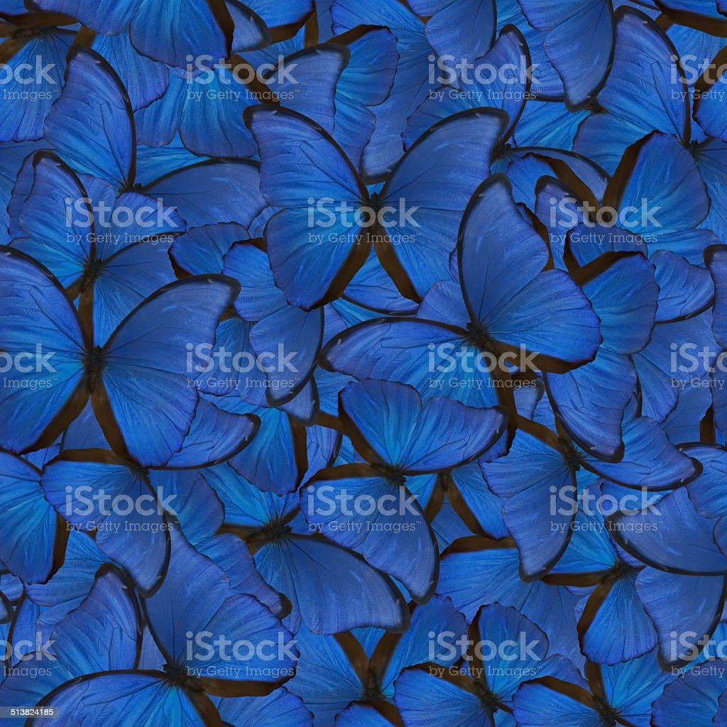 seamless background from blue morpho stock photo