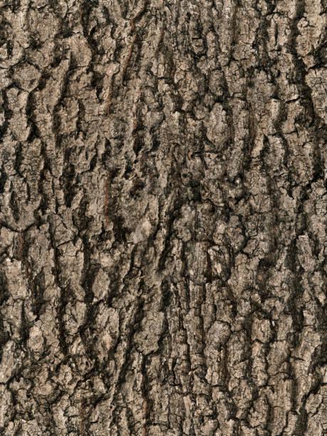 seamless bark tree texture stock photo