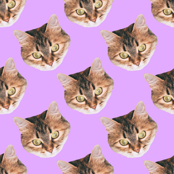 seamless cat head pattern on purple background stock photo