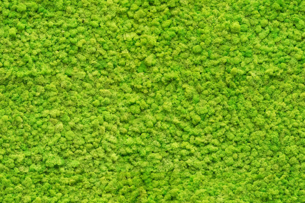 seamless close up green moss texture stock photo