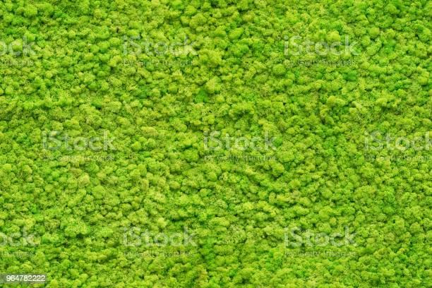 Photo of seamless close up green moss texture