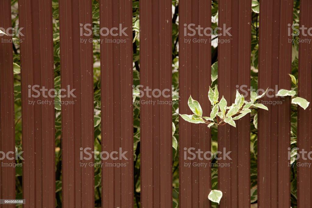 Nahtlose Behalter Muster Aluminium Zaun Verzinktem Stahlblech Wand