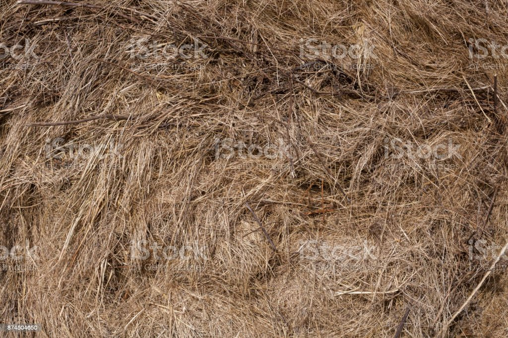 Seamless dry grass background. Nature themes stock photo