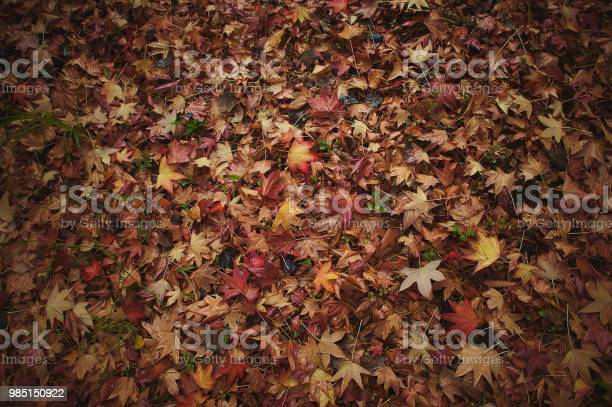 Photo of Seamless Fall Autumn Poplar Leaves on Forest Floor; Background Fall Scene