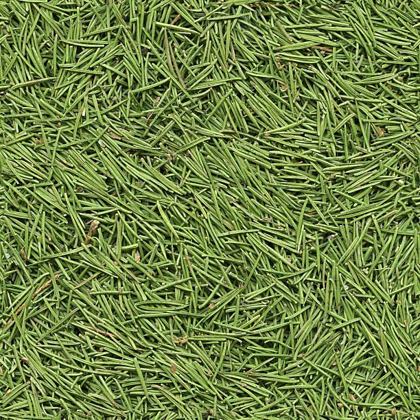 Seamless fir needles background stock photo