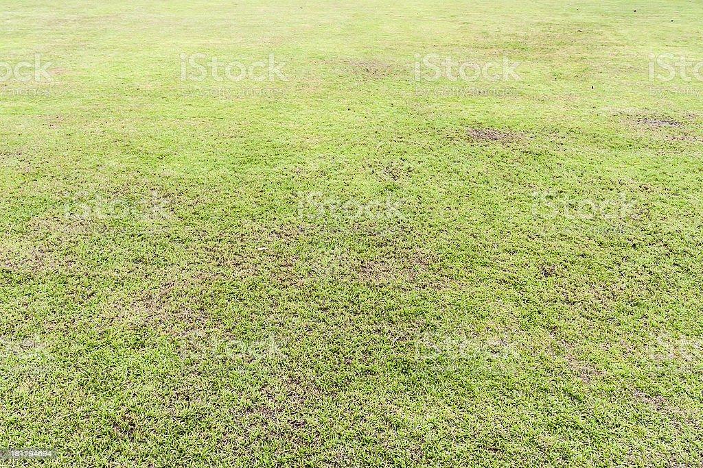 Seamless grass field royalty-free stock photo