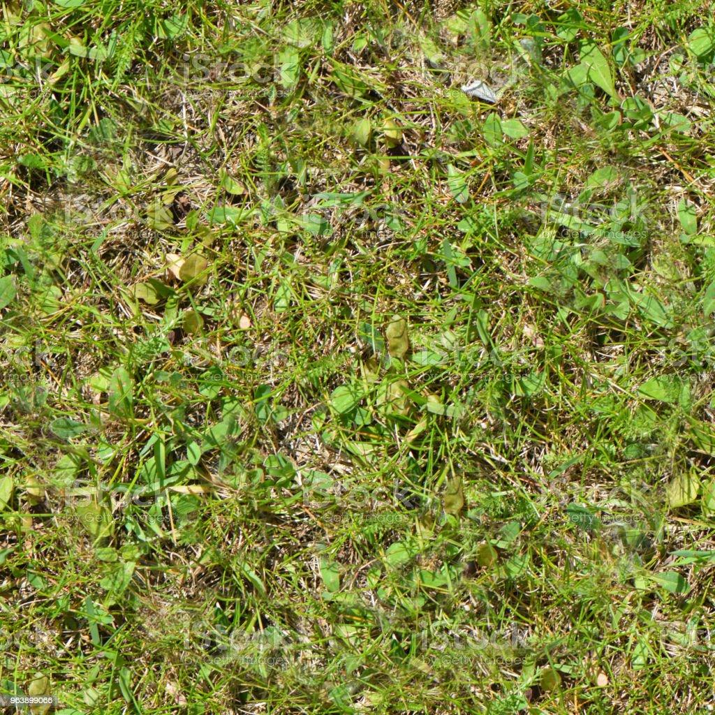 Seamless grass. Fresh green grass moss floor garden texture background - Royalty-free Backgrounds Stock Photo