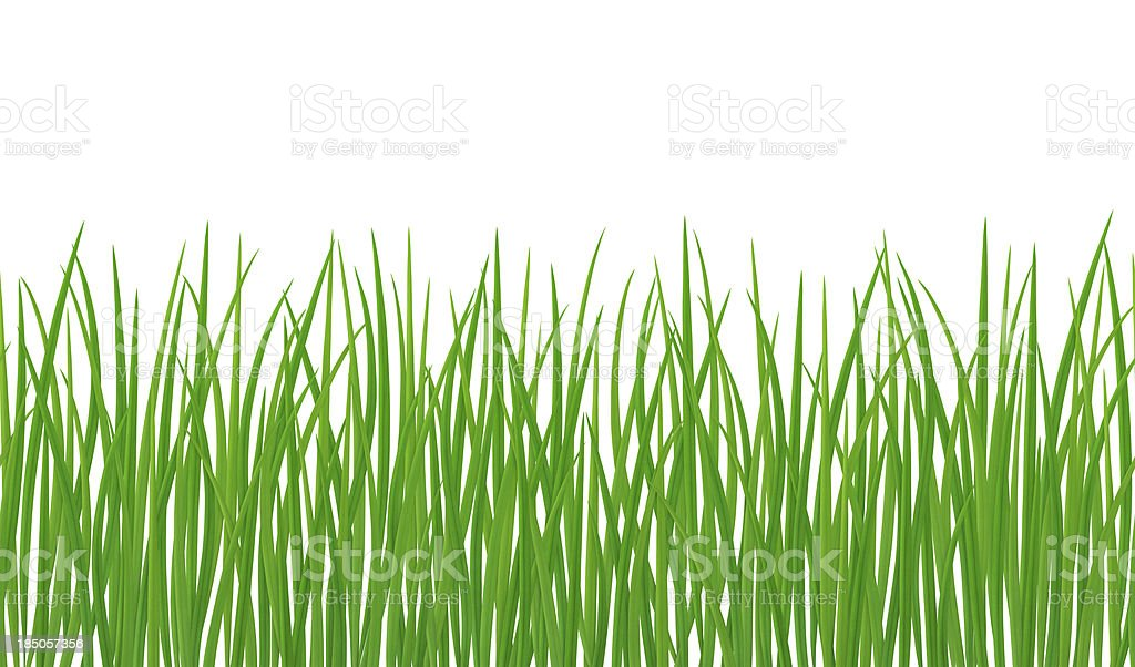 Seamless Grass royalty-free stock photo