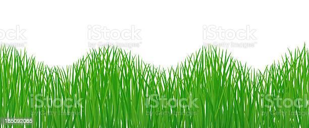 Seamless grass picture id185092085?b=1&k=6&m=185092085&s=612x612&h=zghzjhnhweueozbo5rf m yvyb 2 yczea5l5h6psw4=