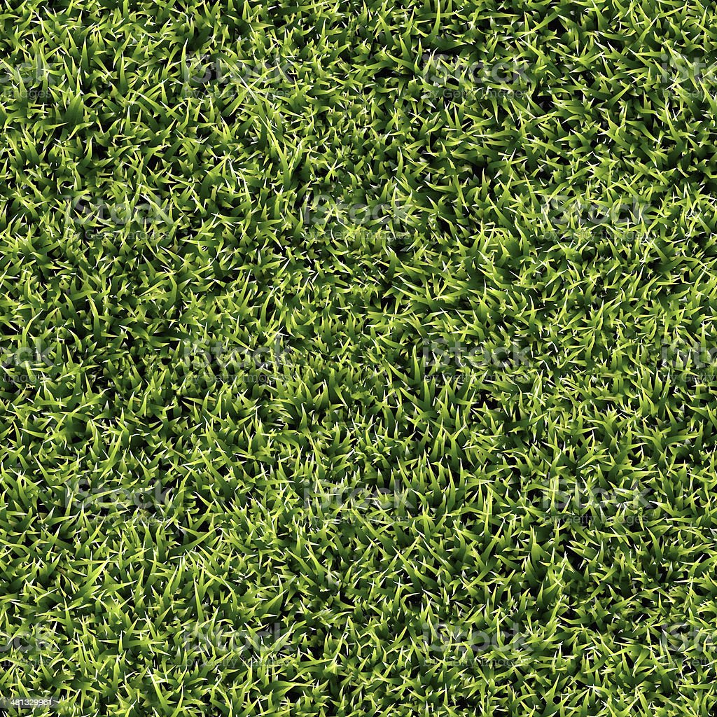 seamless grass texture stock photo