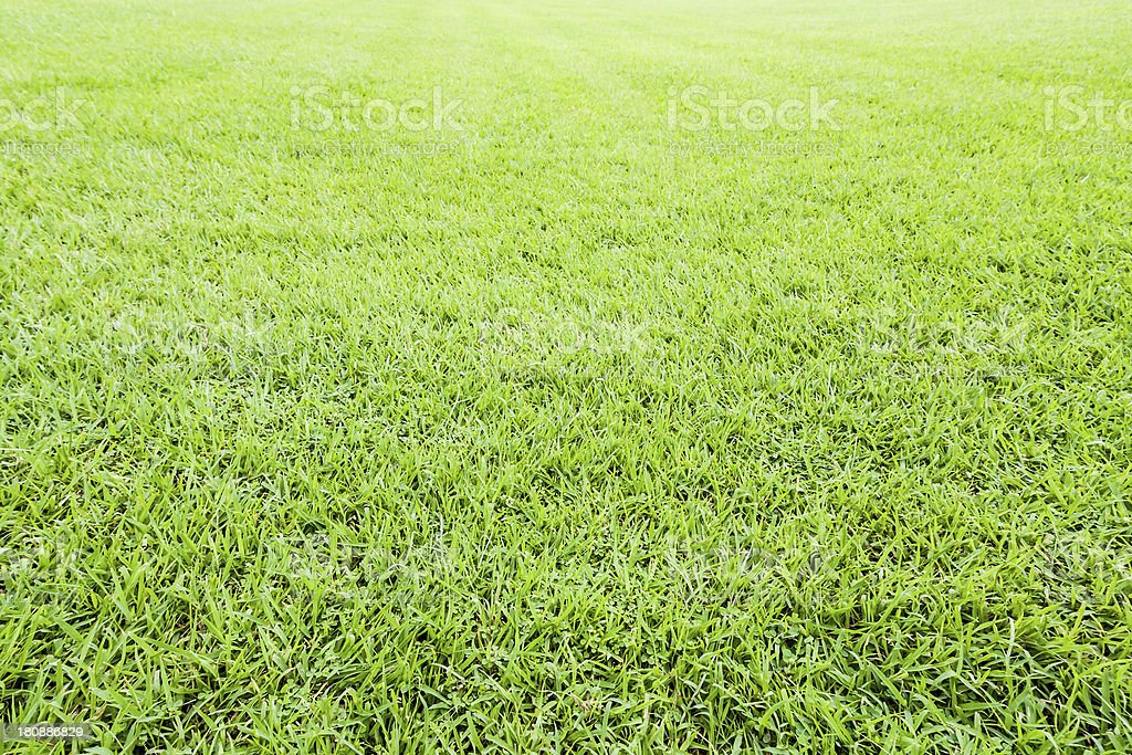 Seamless green grass background royalty-free stock photo