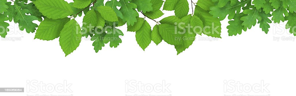 Seamless Leaves royalty-free stock photo