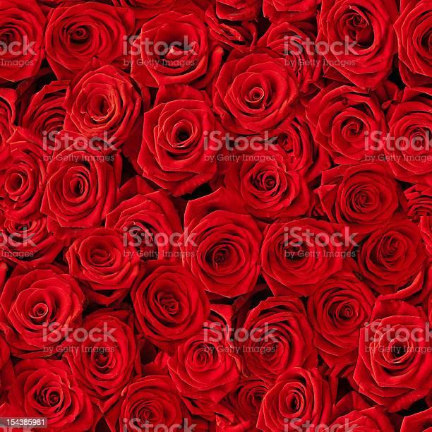 Seamless multiple red roses background picture id154385981?b=1&k=6&m=154385981&s=612x612&h=3lftetkz5uo2ix8jinzs lgnwb2wavlvrfdsogr2b w=