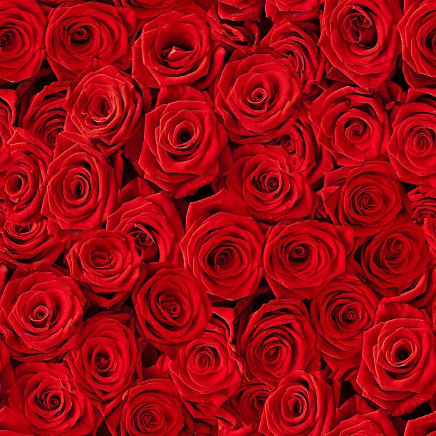 Seamless multiple red roses background picture id154385981?b=1&k=6&m=154385981&s=612x612&w=0&h=y6msvvenglilbbtxr2jix0vstnmksguqqookkkuqxyu=