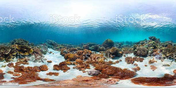 Seamless panorama of the sea floor picture id612380596?b=1&k=6&m=612380596&s=612x612&h=vz7od0dqwunuy9onma4puc0jgtr7kqriuou2f6 ytyq=