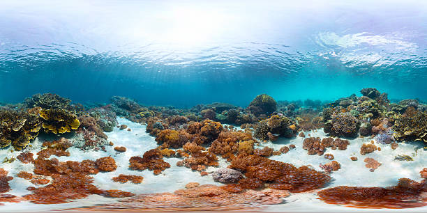 Seamless panorama of the sea floor picture id612380596?b=1&k=6&m=612380596&s=612x612&w=0&h=6nrop2i5vzsouc5jpoeimmq 12g1mddhcamnlp cgqw=