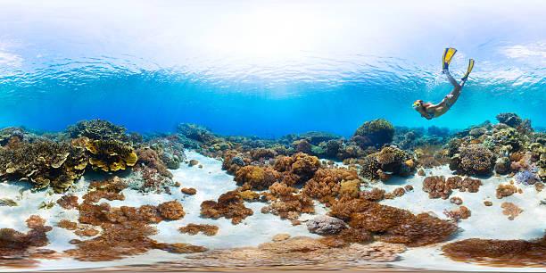 Seamless panorama of the sea floor picture id612381970?b=1&k=6&m=612381970&s=612x612&w=0&h=moocc7l7ovf2zc805gbuiays3mwe8sechckabkkadvc=