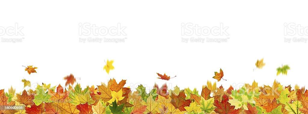 Seamless pattern of autumn leaves on bottom border on white royalty-free stock photo