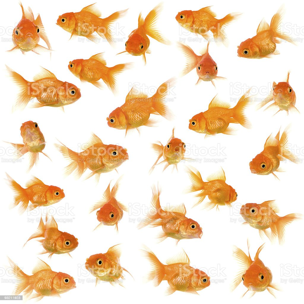 Seamless pattern of goldfish in different angles stock photo