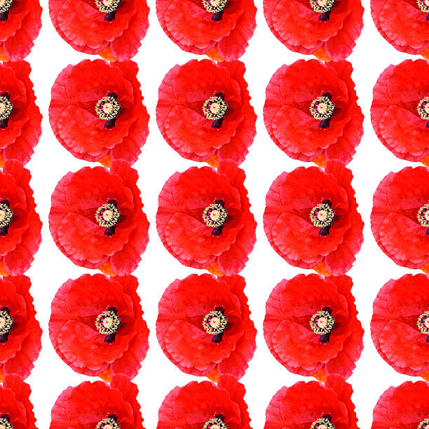 Seamless pattern of red poppies on white stock photo