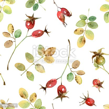 istock Seamless pattern with rosehip 626620192