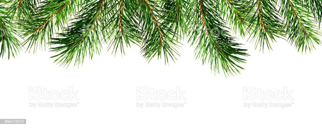 Seamless pine twigs edge stock photo