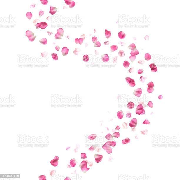 Seamless pink rose petals curve picture id474609118?b=1&k=6&m=474609118&s=612x612&h=j os209xagwkqdu6naembussxg7hd6ub7s5c voxytw=