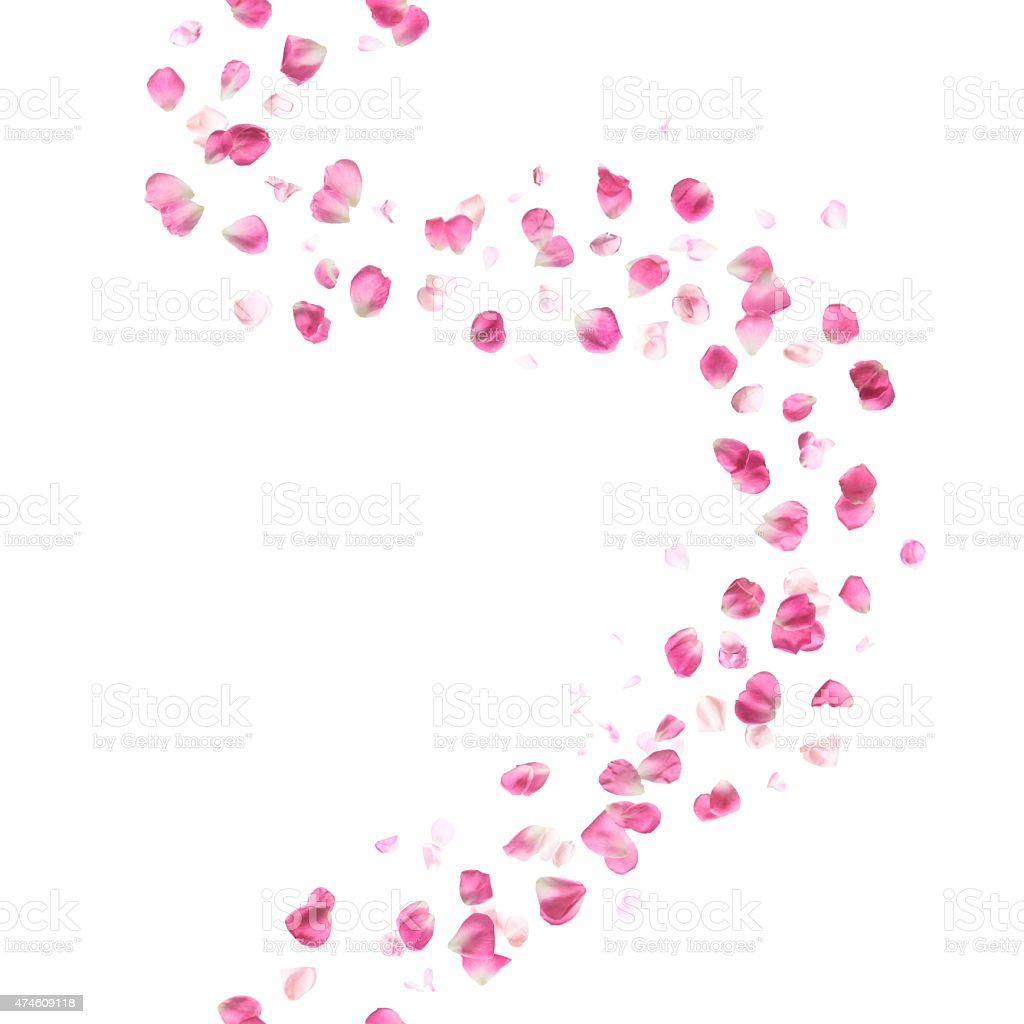 Seamless Pink Rose Petals Curve stock photo