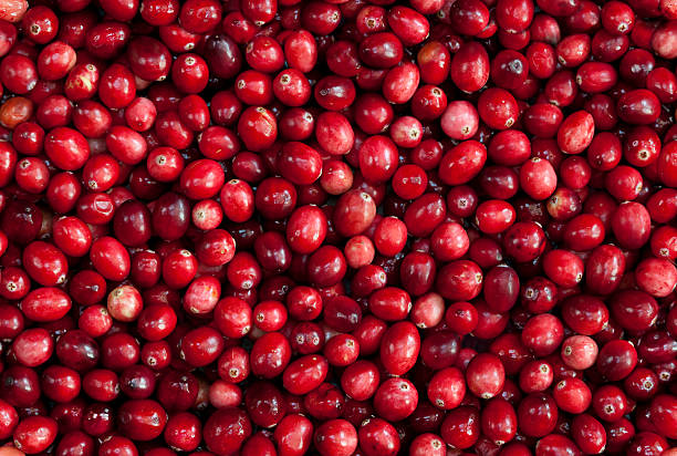 TILEABLE Seamless Red Cranberry Fruit Background  terryfic3d stock pictures, royalty-free photos & images