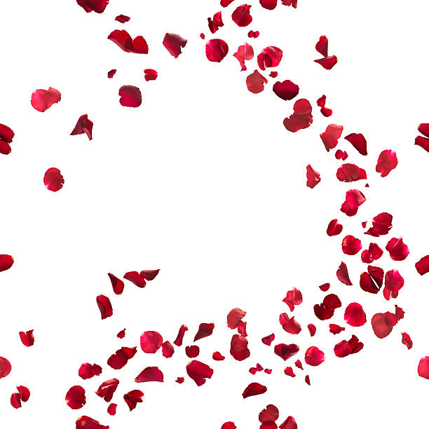 seamless red rose petals breeze - rose petals stock pictures, royalty-free photos & images