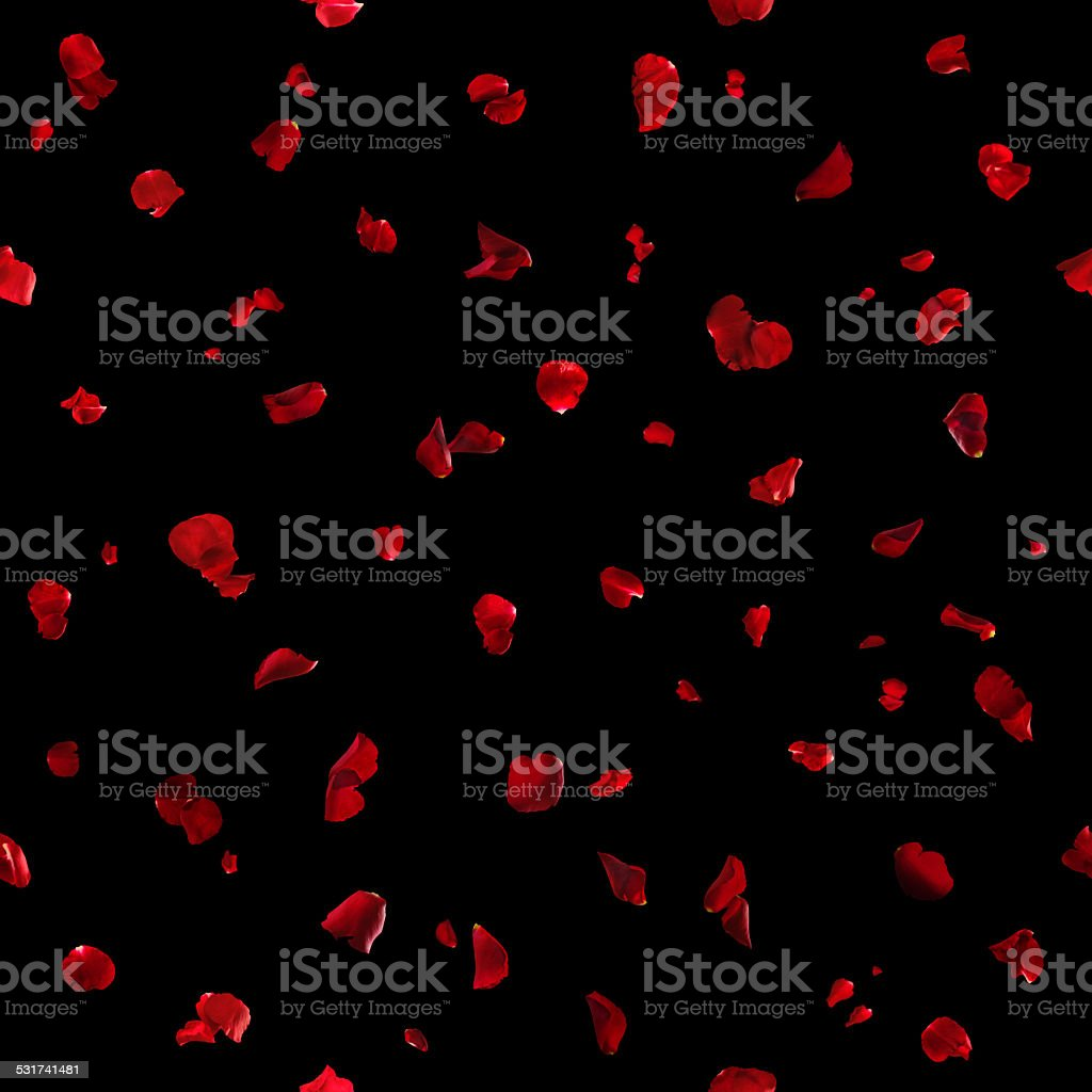 Seamless Red Rose Petals on Black stock photo