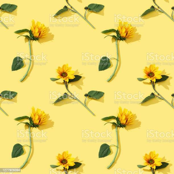 Photo of Seamless regular pattern from beautiful sunflower on yellow paper. Natural autumn flowers.