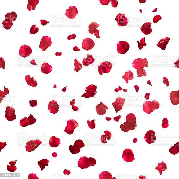 Seamless rose petals picture id148050412?b=1&k=6&m=148050412&s=612x612&h=7rv5gcv2htc19x2syf96z8e5b4hj0tjg4pgcku8x 1c=