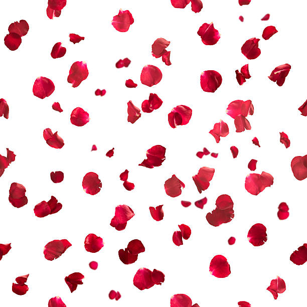 seamless rose petals - rose petals stock pictures, royalty-free photos & images