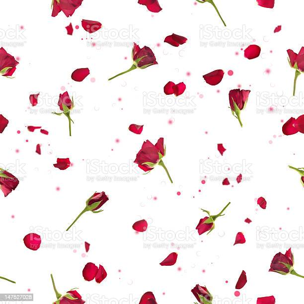 Seamless roses and petals in red picture id147527028?b=1&k=6&m=147527028&s=612x612&h=9ygkefk7 cf35j99u4ct3ynosgms6nmbkfyyvenldbq=