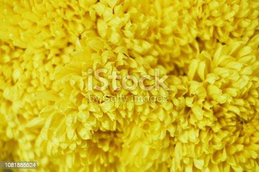 Seamless texture of yellow rose petals.