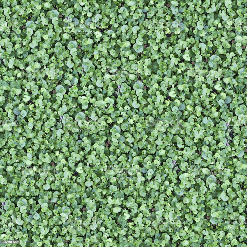 Seamless Tileable Grass Ground Pattern Texture stock photo