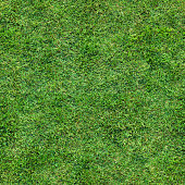 Looking down on a lush grass lawn. This texture repeats seamlessly both horizontally and vertically.