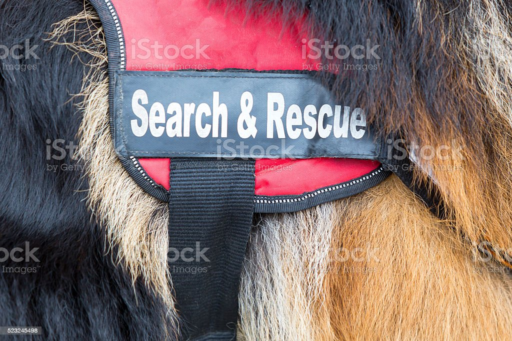 Search and rescue dog stock photo