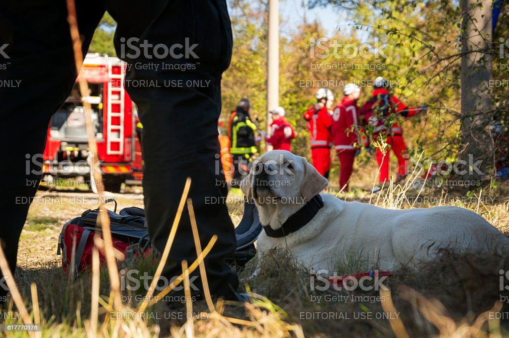 Search and Rescue dog with firefighters in the background stock photo
