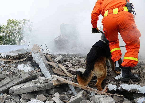 search and rescue Search and rescue forces search through a destroyed building with the help of rescue dogs. environmental cleanup stock pictures, royalty-free photos & images