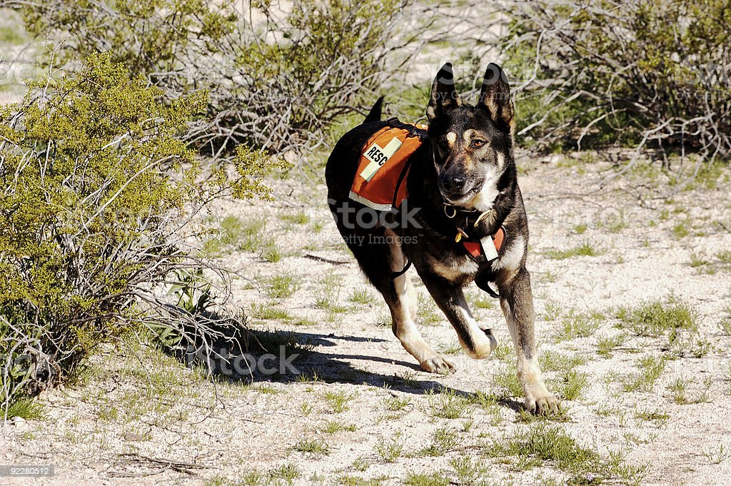 Search Dog stock photo