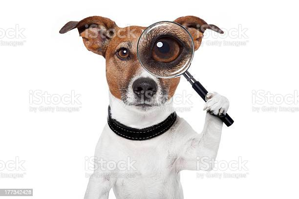 Searching dog with magnifying glass picture id177342428?b=1&k=6&m=177342428&s=612x612&h=d2zbv9dketf7qxsqst9z19tiyjvdkos 6bsfipa xgk=