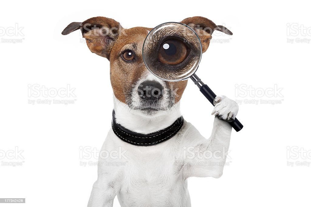 searching dog with magnifying glass stock photo