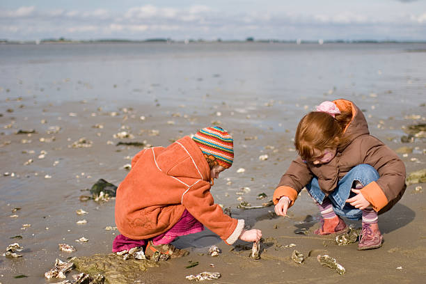 searching oysters at the north sea - little girl picking up sea shells at the beach stock pictures, royalty-free photos & images